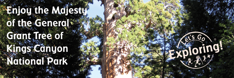 Enjoy the Majesty of the General Grant Tree of Kings Canyon National Park