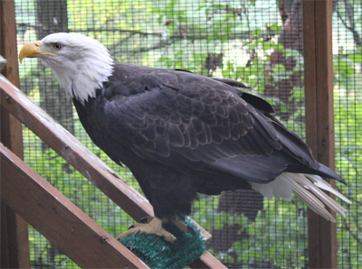 Seeing Eye-to-Eye with Birds of Prey in Eugene, Oregon